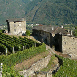 Azienda Agricola Fay